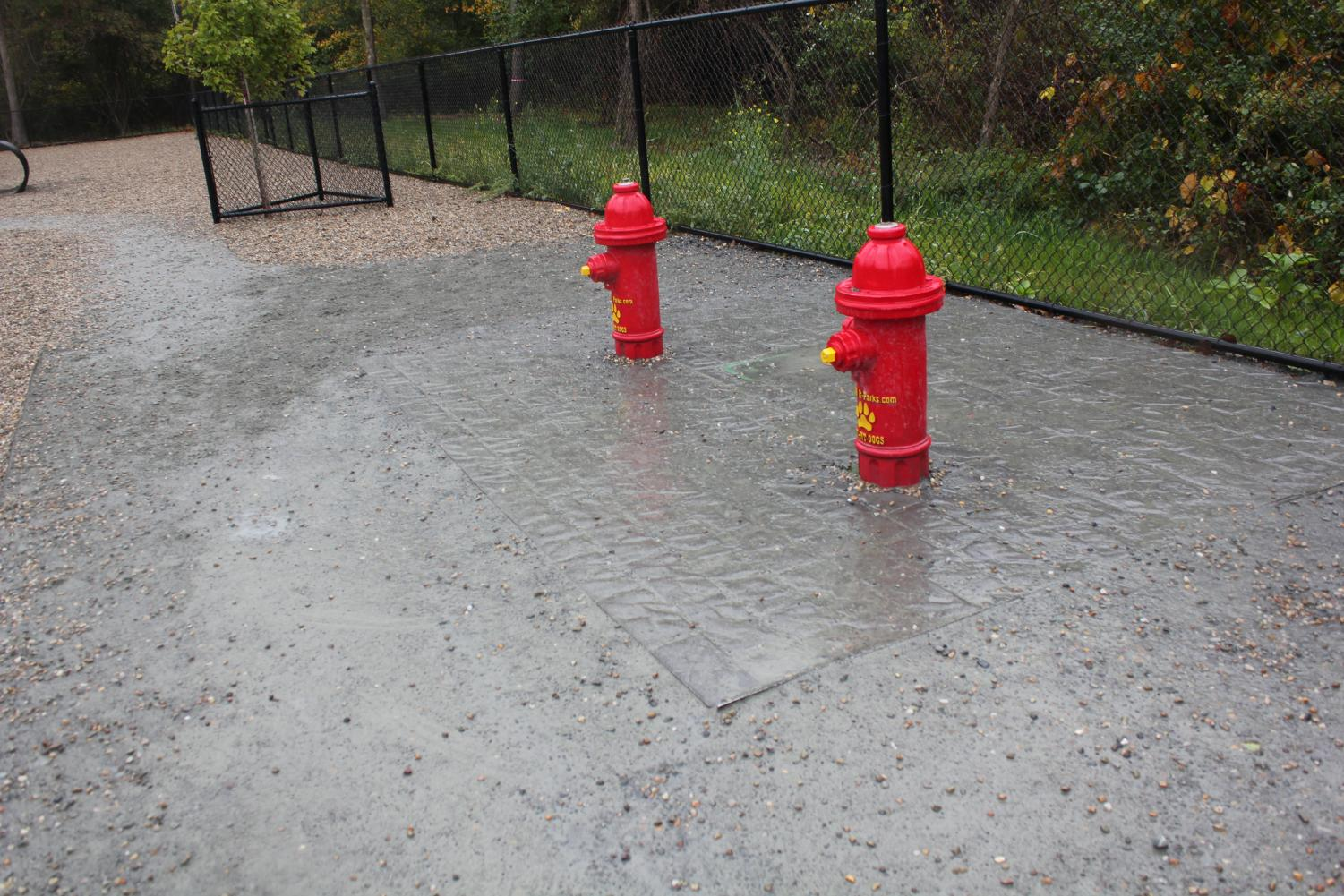 Fire+hydrants+painted+a+bright+red+are+located+inside+the+Abington+Dog+Park.+photographed+October+9%2C+2019.