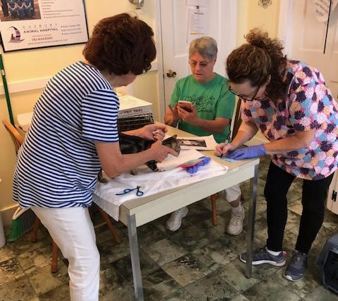 One of the kittens from Florida is being checked in by the Shelter Director Julia Fratalia (left), Kathy Bergeron (center), and Joyce Keyes (right) in 2019.