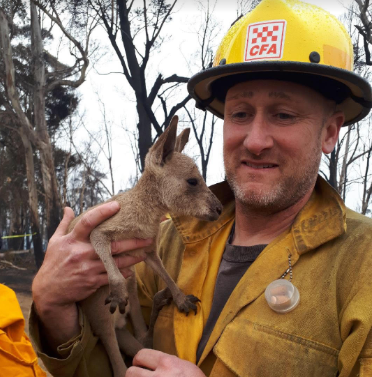 Brian Stearns, a Huron-Manistee National Forests employee, is pictured with a kangaroo joey who approached firefighters in the field seeking refuge from the Australian wildfires. The U.S. Forest Service fire crews are continuing to mobilize to assist during the Australian Bushfires Disaster. Date: 8 January 2020