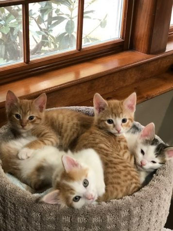 Kittens cuddling together in a cat perch, May 2020