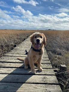 When not teaching, Ms. Victoria Tansey enjoys hiking and taking walks with her dog Cooper, seen here on Wednesday, November 11,  2020 Rivermoor Habitat Park, Scituate.
