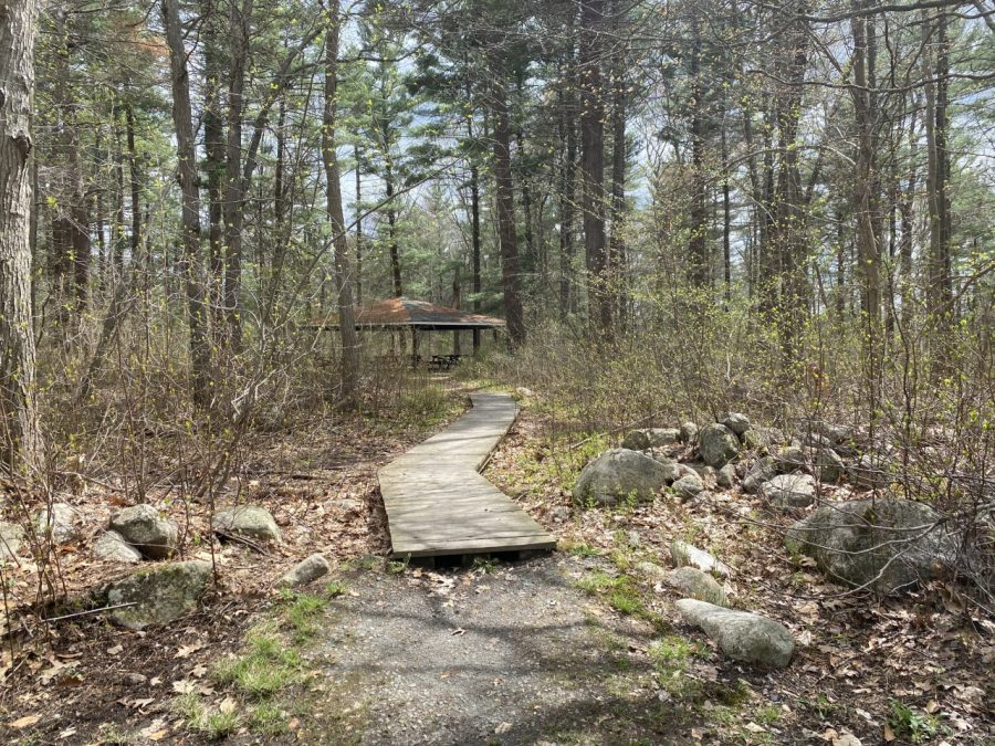 Springtime's warm sun and longer days is nudging the leaves to open on the trees surrounding this boardwalk and trail at Ames Nowell State Park in Abington, Mass. Friday, April 30, 2021.